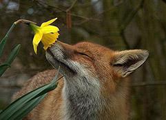 SMELL THE FLOWERSss