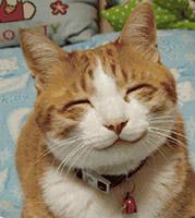 SMILING CATsm