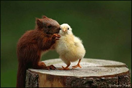 SQUIRREL AND CHICKsm