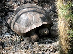 tortoise-sm
