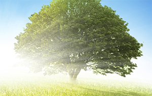 DLTS-Tree